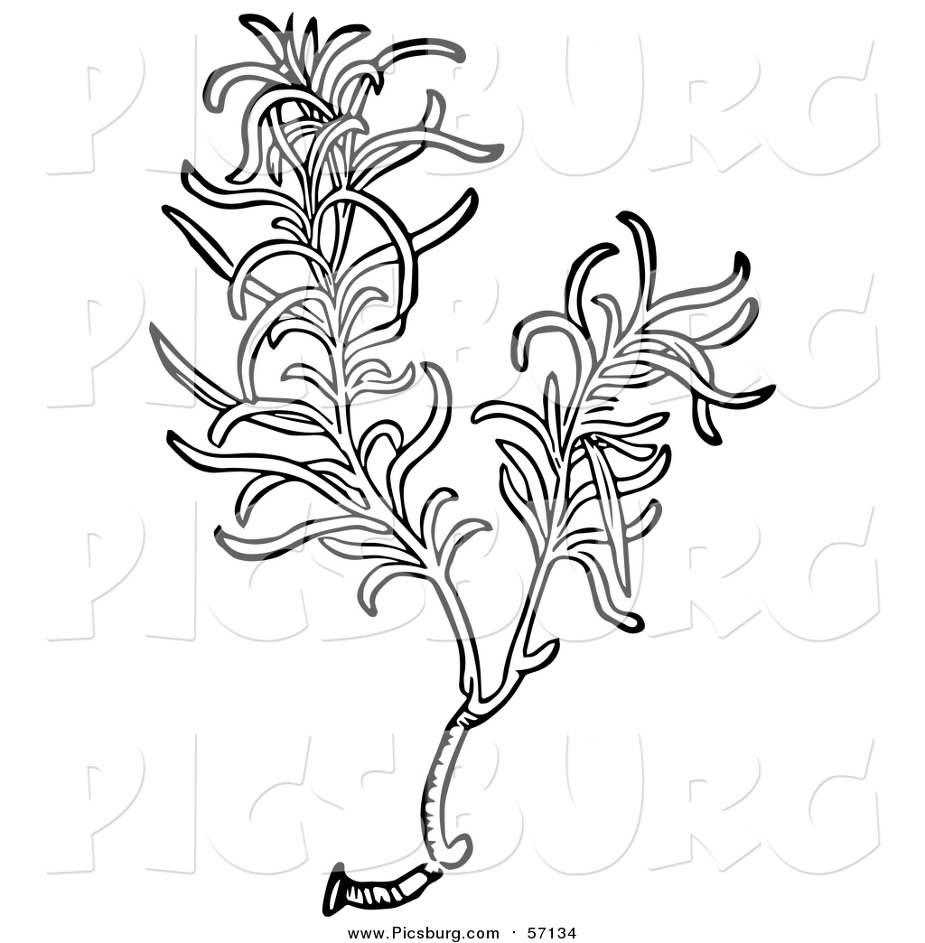 Vector Clip Art of a Black and White Aromatic Culinary Herbal.