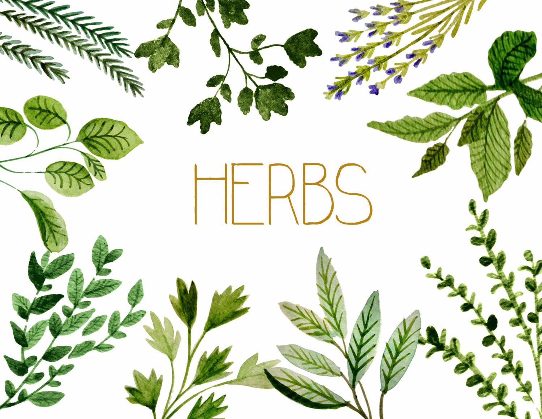 Herb Clip Art Free.