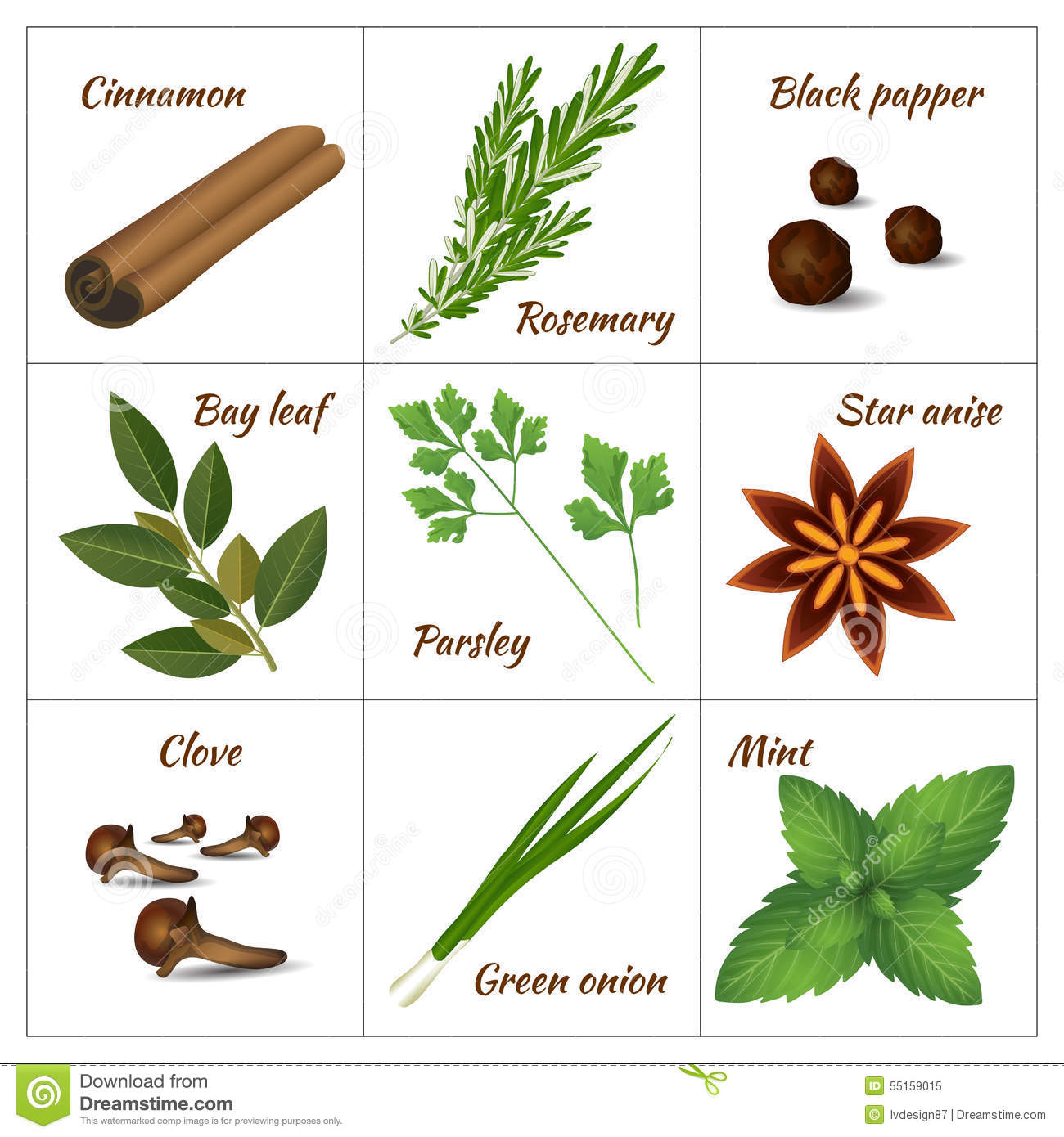 Set Of Different Culinary Herbs Or Medicinal, Curative Aromatic.