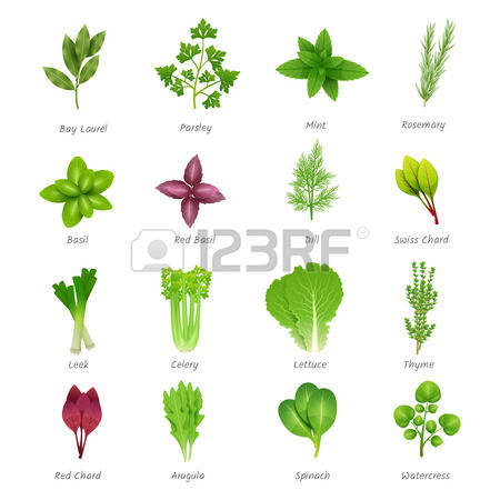 13,801 Aromatic Stock Illustrations, Cliparts And Royalty Free.
