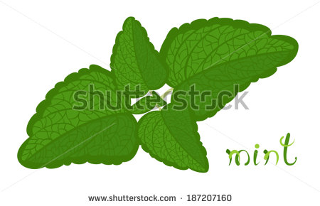 Green Mint. Illustration Of Twig With Fresh Mint Leaves. Cartoon.