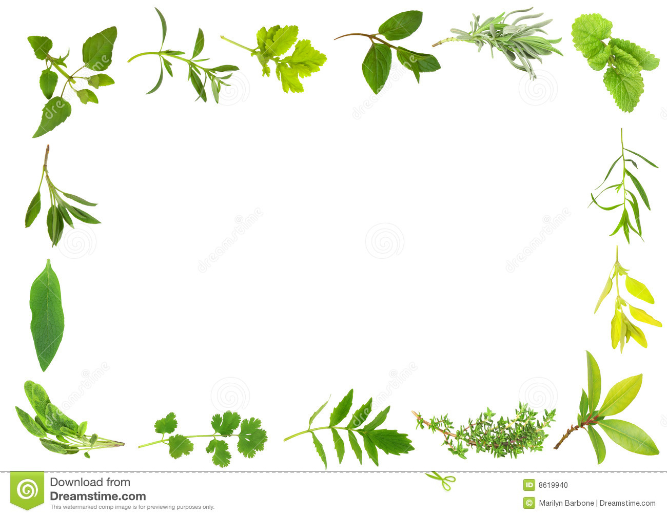 herbal clipart clipground free clipart of apple hill free clipart of apple outline
