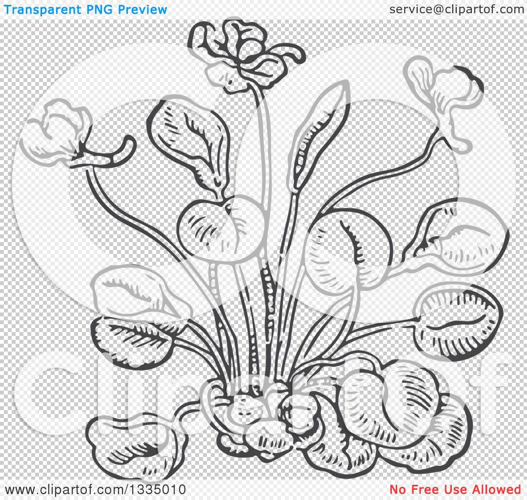 Clipart of a Black and White Woodcut Aromatic Herbal Sweet Violet.