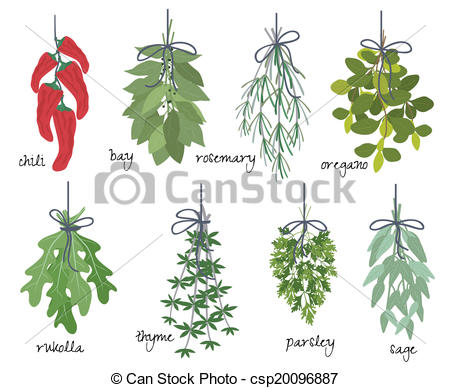Vector of Bunches of medicinal aromatic herbs.