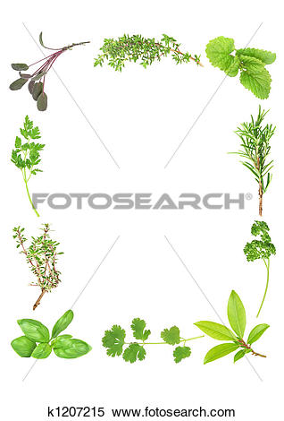 Stock Illustration of Fresh Aromatic Herbs k1207215.