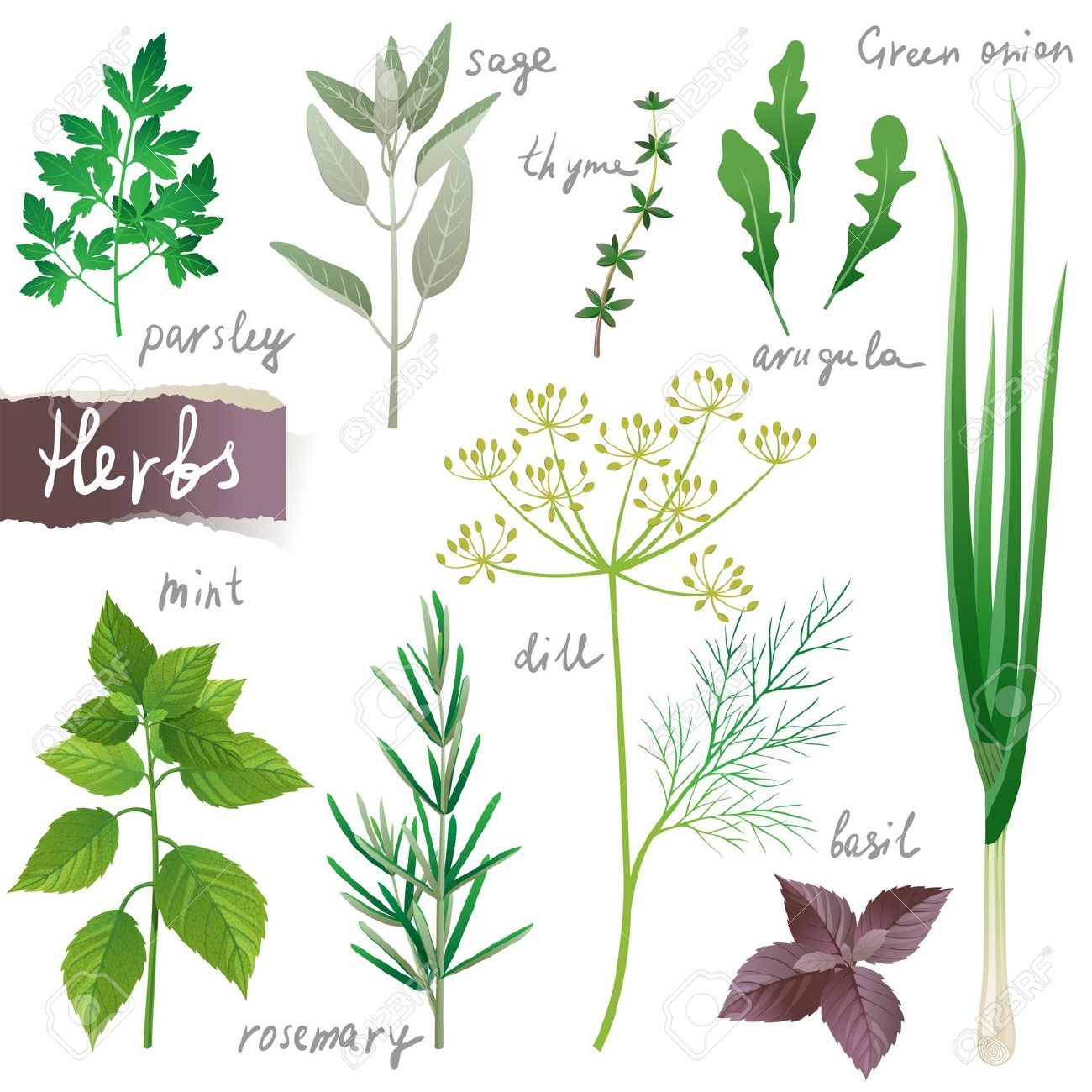 Aromatic Herbs Set Royalty Free Cliparts, Vectors, And Stock.