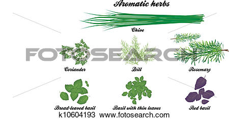 Clipart of Aromatic herbs poster k10604193.