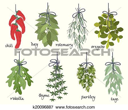 Clip Art of Bunches of medicinal aromatic herbs k20096887.