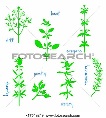 Clip Art of Aromatic Herbs k17549249.