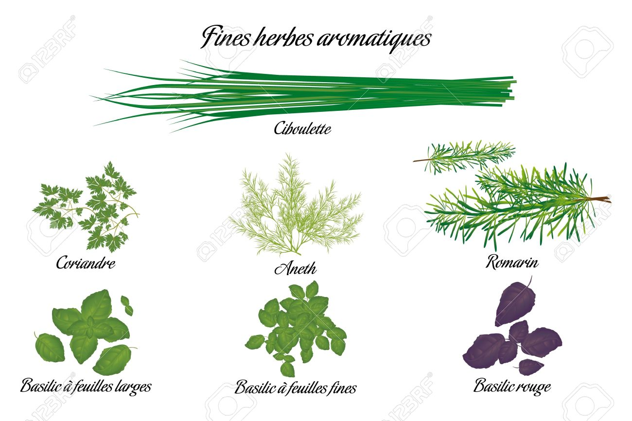 Aromatic Herbs Poster With All Descriptions In French Royalty Free.