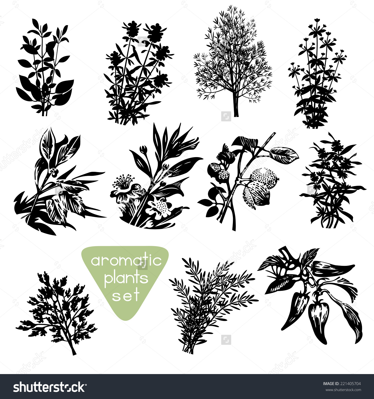 Aromatic Herbs Hand Drawn Silhouettes Set Stock Vector 221405704.