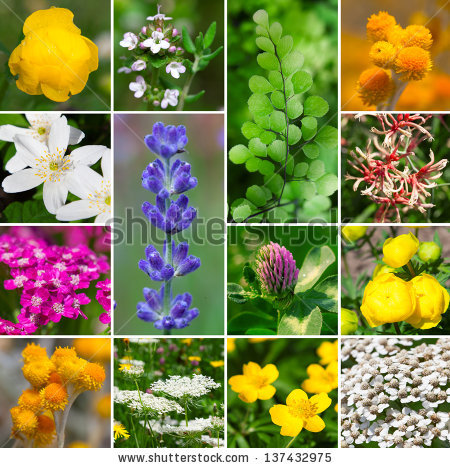 Aromatic Plant Stock Photos, Royalty.