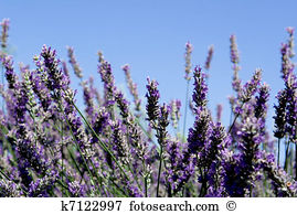 Aromatic plants Stock Photos and Images. 55,051 aromatic plants.