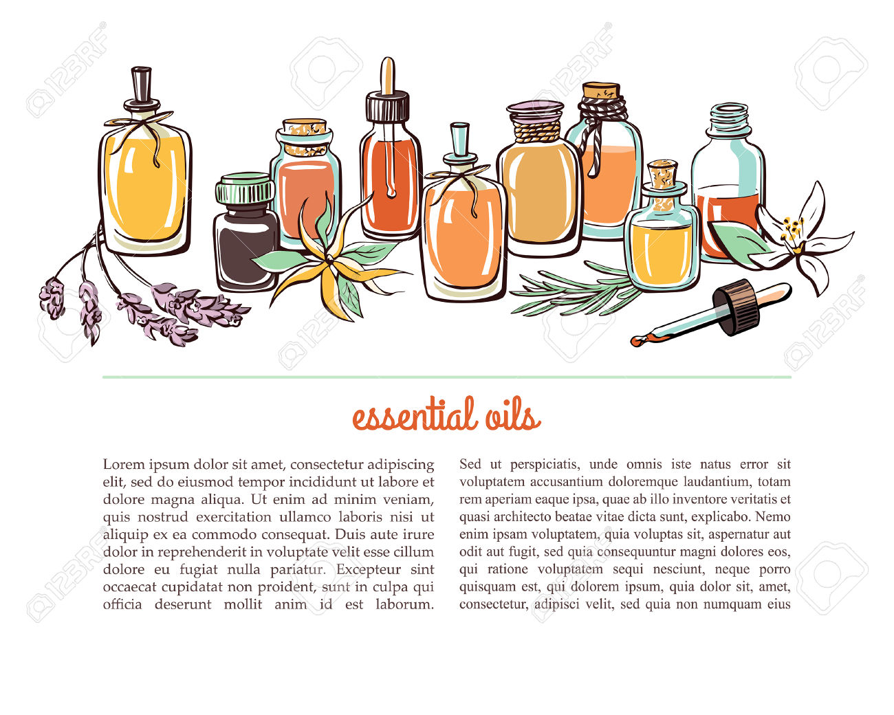 Vector Illustration With Essential Oil Bottles, Aromatic Plants.