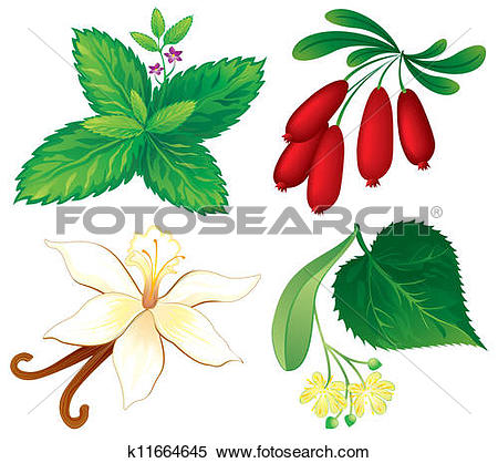 Clipart of Set of aromatic plants k11664645.