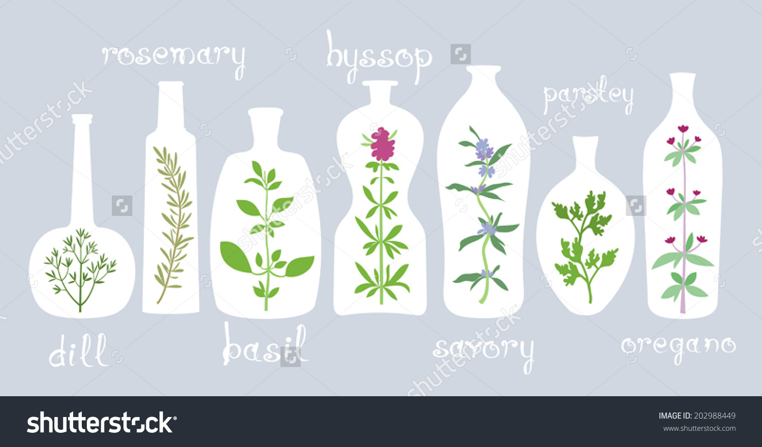 Aromatic Plants Bottles Different Bottles Various Stock Vector.