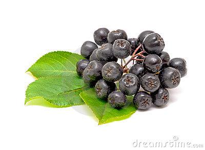 Aronia Fruit On White Background Royalty Free Stock Photos.