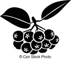 Black chokeberry Clip Art Vector Graphics. 95 Black chokeberry EPS.