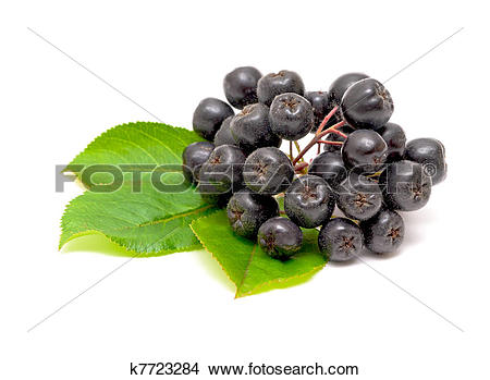 Stock Photo of Aronia berries on a white background k7723284.