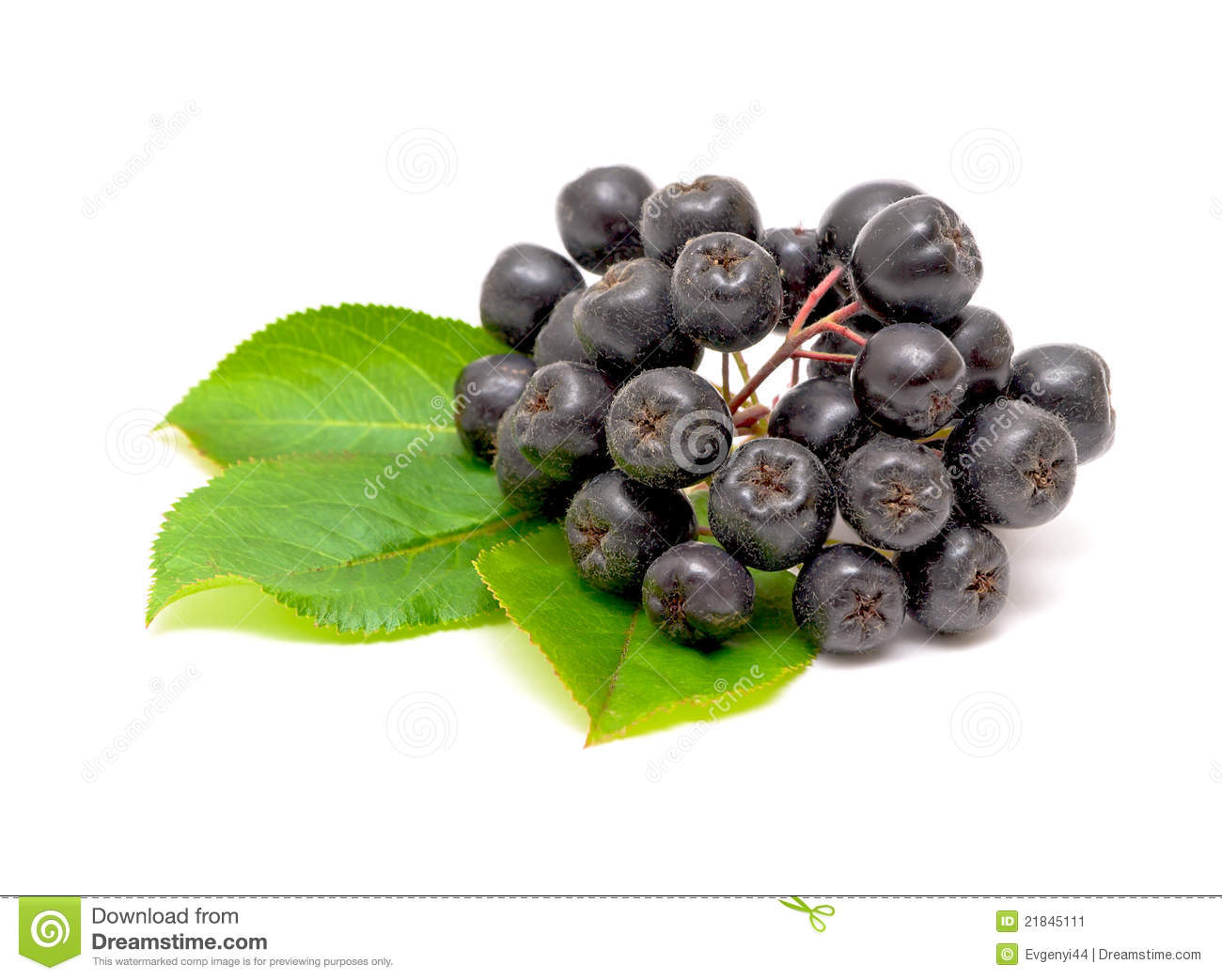 Aronia Berries On A White Background Stock Image.
