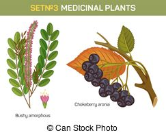 Aronia berries Clipart Vector Graphics. 22 Aronia berries EPS clip.
