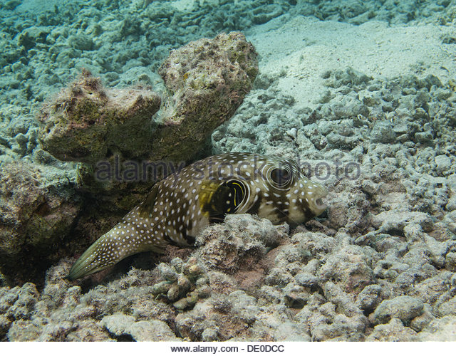 Black Finned Stock Photos & Black Finned Stock Images.