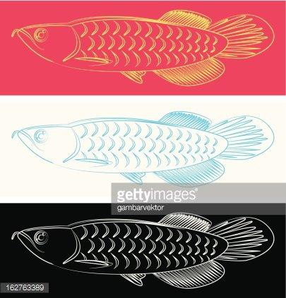 arowana fish Clipart Image.