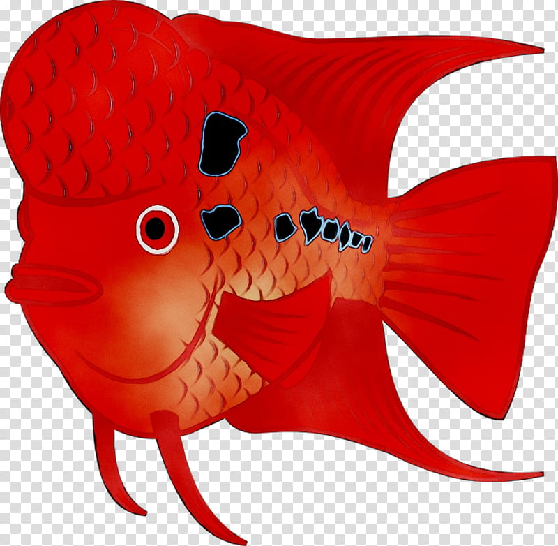 Arowana transparent background PNG cliparts free download.