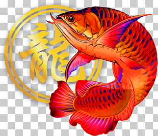 19 Asian arowana PNG cliparts for free download.
