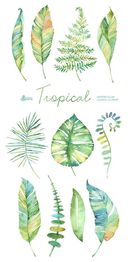 Tropical watercolor leaves. Handpainted clipart, foliage, grass.