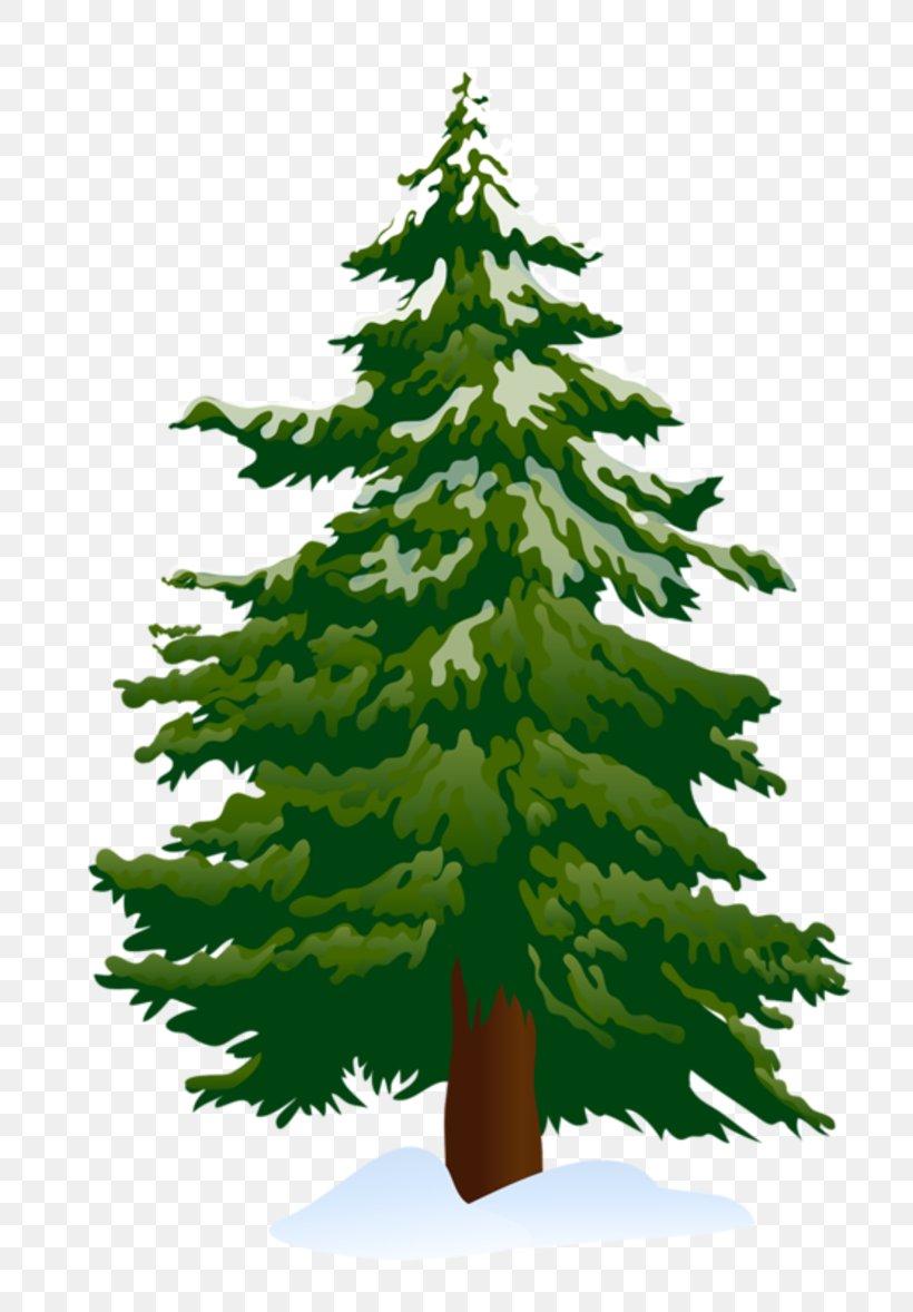 Pine Tree Fir Clip Art, PNG, 800x1178px, Pine, Biome, Blog.
