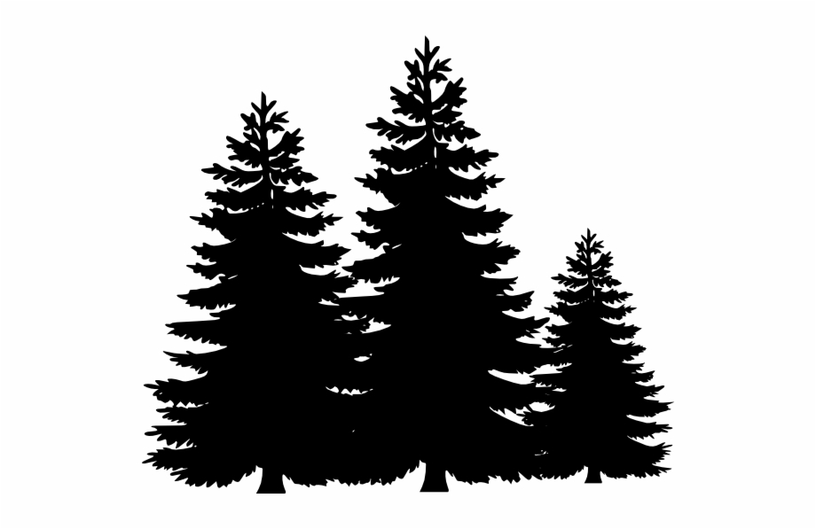 Black And White Pine Tree Clipart 6066 Pine Trees Clip.