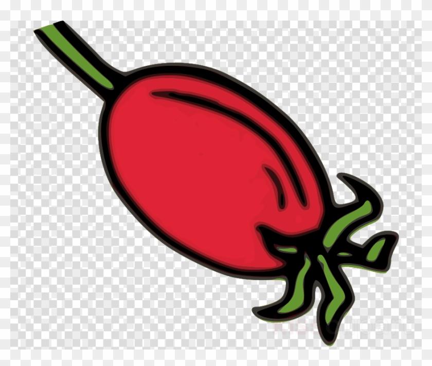 Download Rose Hips Clip Art Clipart Rose Hip Dog Rose.