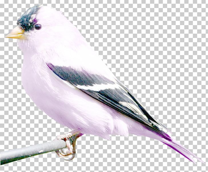 Bird Art Photography PNG, Clipart, Animals, Art, Art Nouveau.