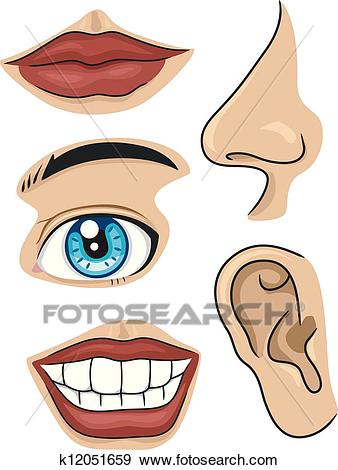 Parts of the Face Clip Art.