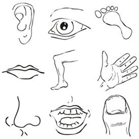 body images clip art.