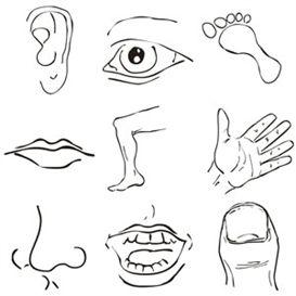 Free Parts Cliparts, Download Free Clip Art, Free Clip Art.
