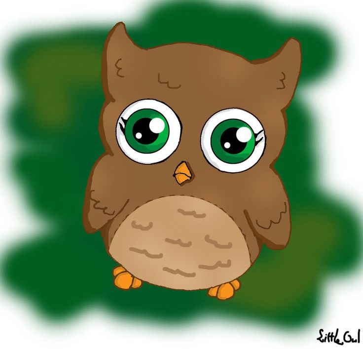 1000+ images about Owl.
