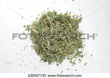 Stock Photo of Estragon.