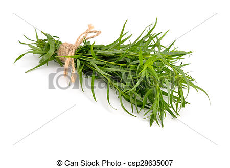 Stock Photography of Tarragon (Artemisia dracunculus) Isolated on.