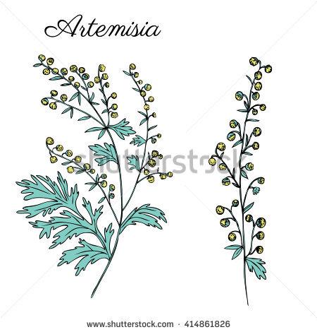 "artemisia Leaves"" Stock Photos, Royalty."