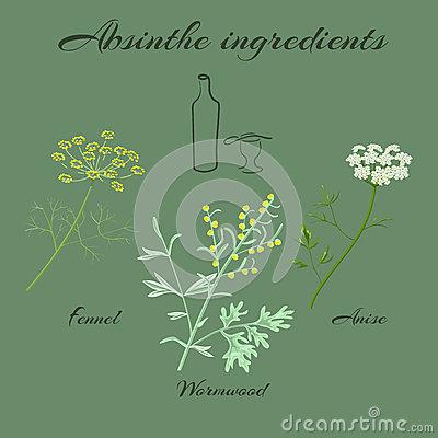 Common Wormwood Artemisia Vulgaris Stock Illustrations.