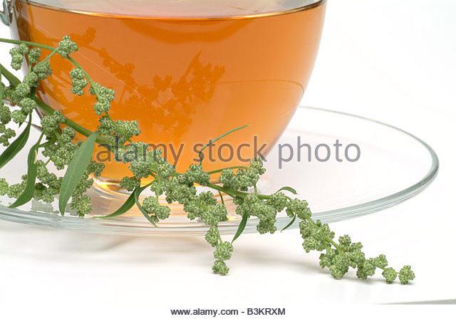 Mugwort Tea Stock Photos & Mugwort Tea Stock Images.