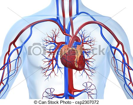 Arterial Illustrations and Clip Art. 425 Arterial royalty free.
