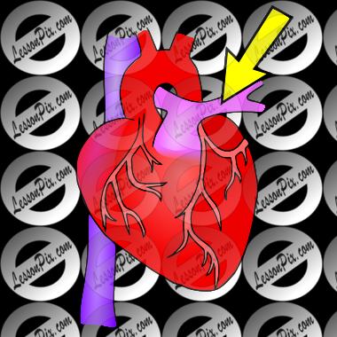 Artery Clipart.