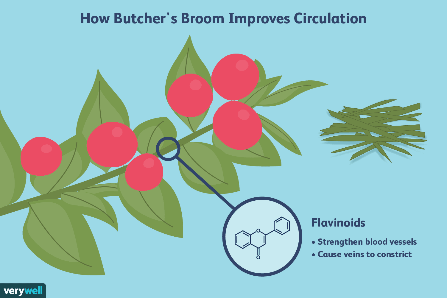 Butcher\'s Broom Benefits for Chronic Venous Insufficiency.