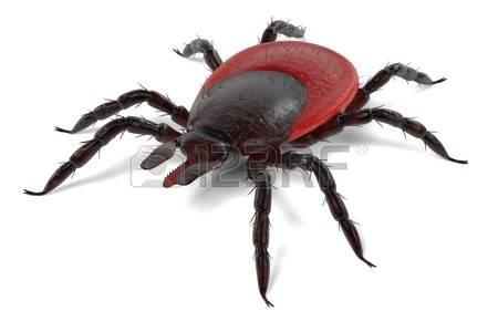 408 Arthropoda Cliparts, Stock Vector And Royalty Free Arthropoda.