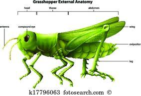 Arthropoda Clipart Vector Graphics. 293 arthropoda EPS clip art.
