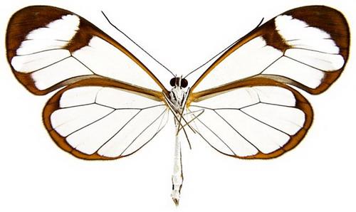 Phylum Arthropoda Pictures.