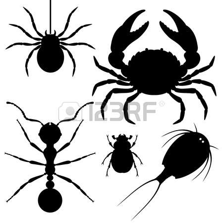 2,625 Arthropods Stock Illustrations, Cliparts And Royalty Free.